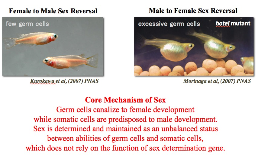 """the scientific explanation of the biology of romantic love and the biology of sexuality Bisexuality is the romantic/sexual attraction to other people who identify as either male or female (""""bi"""" = two genders) this is not the definition that most bisexual organizations use, and your definition is often used to attack bisexuals."""